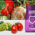 Curame Bordeaux per la cura di pomodoro e vite
