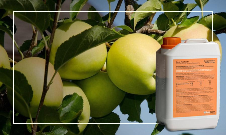 Trattamenti per le malattie di frigoconservazione su melo