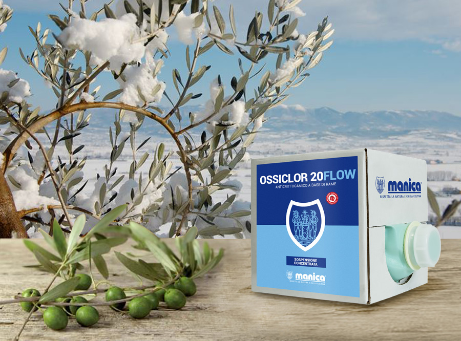 Fungicida contro la rogna dell'olivo e il freddo invernale