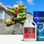 trattamenti in ripresa vegetativa per fruttiferi e ciliegio