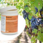 Botector Manica per uva