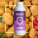 manamid-manica-peronospora-patata-pomodoro