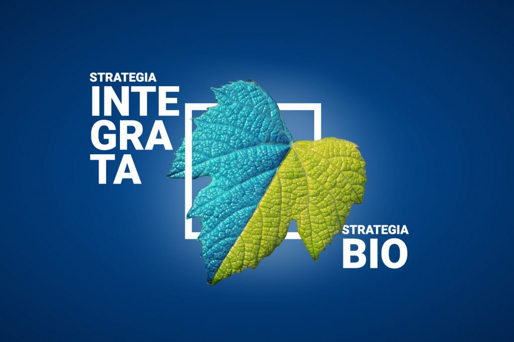 strategie-peronospora-vite-bio