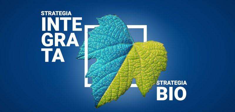 strategie-peronospora-vite-bio